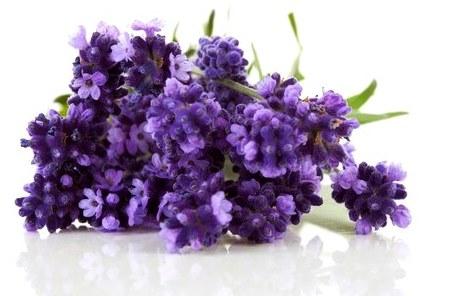 Възглавница Lavender Sense - лавандула